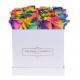 SQUARE WHITE BOX - RAINBOW ROSES